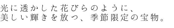 帯留め「桜-cherry blossam」